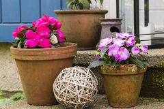 Still live with flower pots Royalty Free Stock Photography