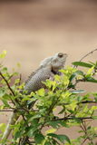 Still lizard. A lizard stay still on the on the branches stock photos