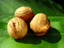 Still nature with walnuts Stock Photo