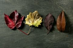 Still Of Autumn Leaves, Dark Wood Background, Fall Stock Images