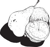 Still , pear and lemon halves , hand-drawn style graphics qualit Stock Image