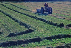 Still plowing. A farmer on his tractor getting ready for this years crop Stock Photos