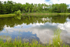 Still Pond Royalty Free Stock Photo