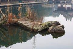 Still pond and rocks Royalty Free Stock Photo