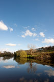 Still river tree reflection Stock Photo