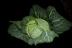 Still with savoy cabbage Royalty Free Stock Photography