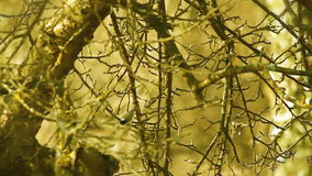 Still shot of branches and tree in specific color stock footage