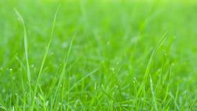 Still shot of green grass sways Stock Image
