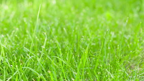 Still shot of green grass sways Stock Images