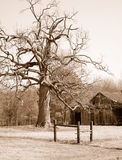 Still Standing. Tree with old barn on winter day royalty free stock photos