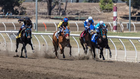 Still a Tight Pack. Horse racing on the track at Cal Expo in Sacramento, California stock image