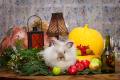 Still to day of thanksgiving with autumn vegetables, fruit, pump Royalty Free Stock Image
