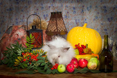 Still to day of thanksgiving with autumn vegetables, fruit, pump Royalty Free Stock Photography