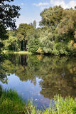Still water. Silent forest lake in summer Stock Photo