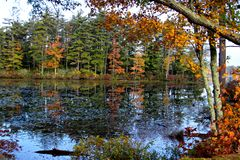 Still water Autumn reflection. A reflection of leaves changing in rural, calm New England pond royalty free stock photography