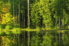 Still water and forest Stock Photography