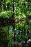 Still water in a marsh in springtime Royalty Free Stock Photos