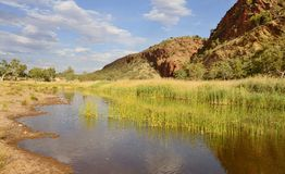 Still Water Near Glen Helen Gorge. The still waters edged by green reeds compliment the red sandstone rock at Glen Helen Gorge, Ouback Central Australia royalty free stock photography