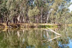 Still Water Reflections In A River. Beautiful water reflections in early morning light on a still river in Australia stock images