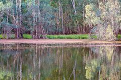 Still Water River Reflections. Beautiful water reflections in early morning light on a still river in Australia stock image