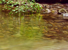Still water with river rocks. Tree dipping into still river water Royalty Free Stock Photos