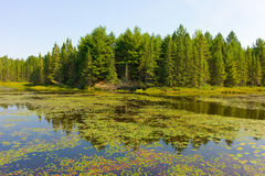 Still water surrounded by forests Stock Images