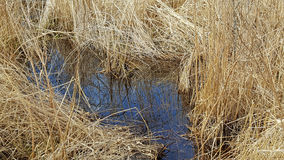 Still water in wetland Royalty Free Stock Images