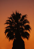 Tropical Palm Tree at Sunset. A lone palm tree silhouetted against a dark orange sky at sunset Royalty Free Stock Photo