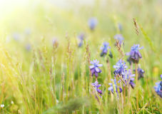Stilla fjädrar blommor Royaltyfri Bild