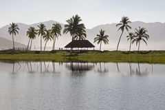 Stilla havetlagun med palmträd Royaltyfri Bild