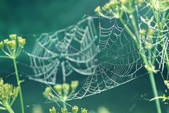 Stilla naturalistisk bakgrund med spindelrengöringsduk med dagg Royaltyfria Foton