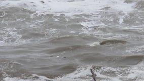 Stillahavs- hav stock video