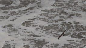 Stillahavs- hav lager videofilmer