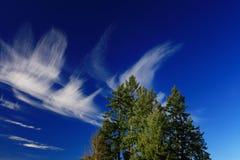 Stillahavs- nordvästlig skog och Douglas granträd Fotografering för Bildbyråer