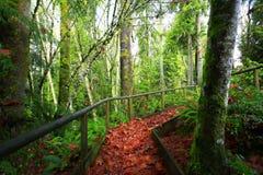 Stillahavs- nordvästlig skog som fotvandrar slingan Royaltyfri Fotografi
