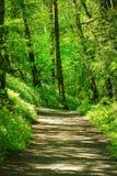 Stillahavs- nordvästlig skog som fotvandrar slingan Arkivbilder