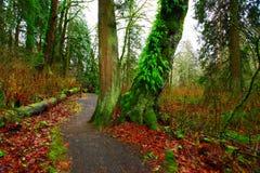 Stillahavs- nordvästlig skog som fotvandrar slingan Royaltyfri Bild