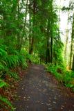 Stillahavs- nordvästlig skog som fotvandrar slingan Royaltyfri Foto