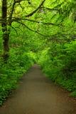 Stillahavs- nordvästlig skog som fotvandrar slingan Arkivfoto