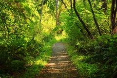 Stillahavs- nordvästliga Forest Trail Arkivfoton