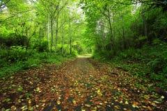 Stillahavs- nordvästliga Forest Trail Royaltyfri Foto