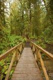 Stillahavs- nordvästliga Forest Trail Fotografering för Bildbyråer