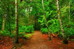 Stillahavs- nordvästliga Forest Trail Arkivbild