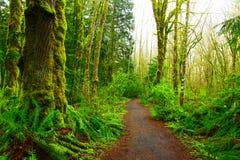 Stillahavs- nordvästliga Forest Trail Royaltyfria Bilder