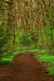 Stillahavs- nordvästliga Forest Trail Arkivfoto