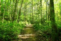 Stillahavs- nordvästliga Forest Trail Royaltyfri Fotografi