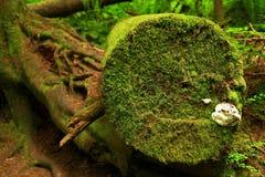 Stillahavs- nordvästliga skog- och barrträdträdjournaler Royaltyfri Foto