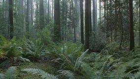 Stillahavs- nordvästligt frodigt Forest Floor dockaskott stock video