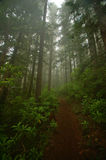 Stillahavs- skog northwest Fotografering för Bildbyråer