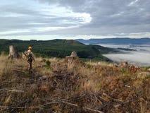 Stillahavs- skog northwest Royaltyfri Fotografi
